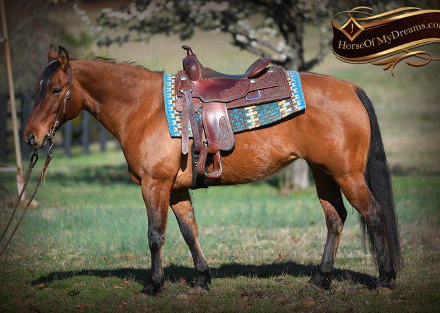 003-Savant-AQHA-Buckskin-Dun-Mare-Reining-Reiner-For-Sale