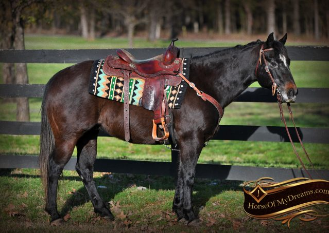 004-Joe2-Black-AQHA-Gelding-For-Sale