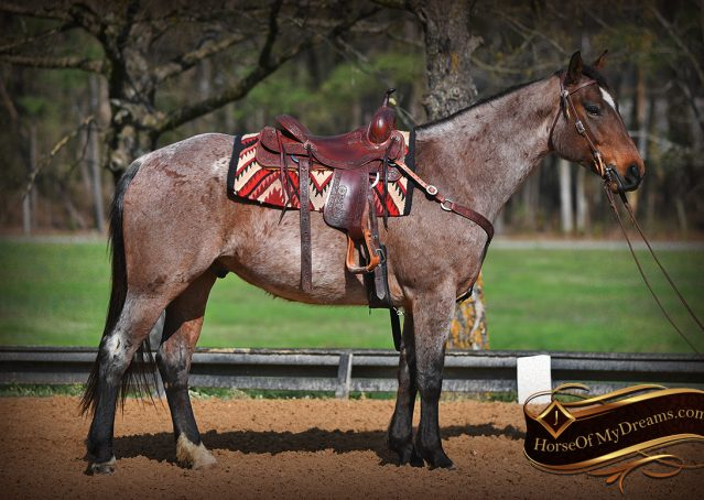 004-Levi-Bay-Roan-Quarter-Horse-For-Sale