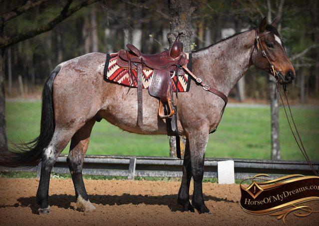 005-Levi-Bay-Roan-Quarter-Horse-For-Sale