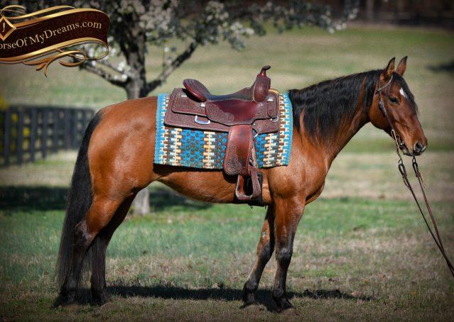 005-Savant-AQHA-Buckskin-Dun-Mare-Reining-Reiner-For-Sale
