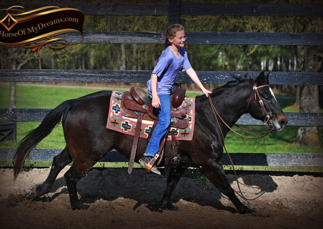 006-Joe2-Black-AQHA-Gelding-For-Sale