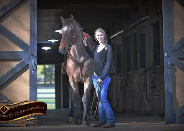 006-Levi-Bay-Roan-Quarter-Horse-For-Sale