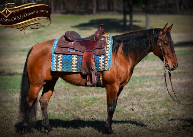 006-Savant-AQHA-Buckskin-Dun-Mare-Reining-Reiner-For-Sale