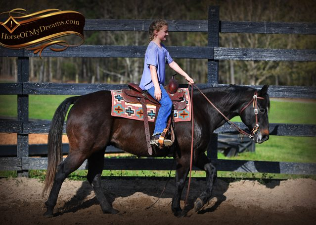 007-Joe2-Black-AQHA-Gelding-For-Sale