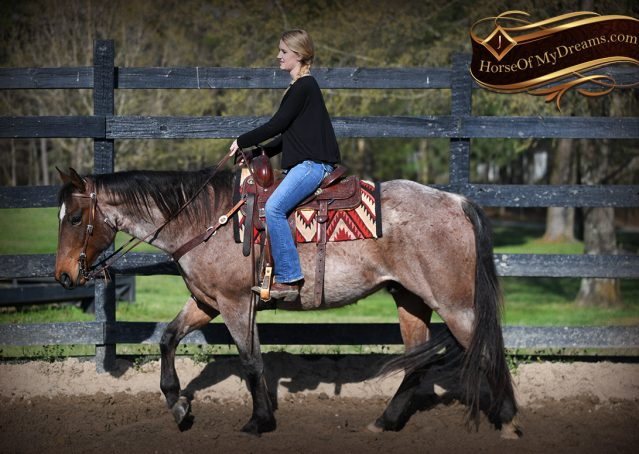 007-Levi-Bay-Roan-Quarter-Horse-For-Sale