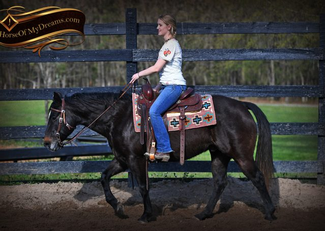 008-Joe2-Black-AQHA-Gelding-For-Sale