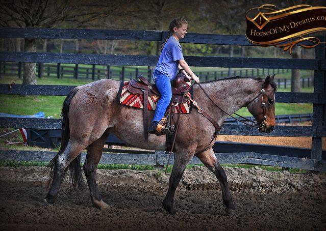 008-Levi-Bay-Roan-Quarter-Horse-For-Sale