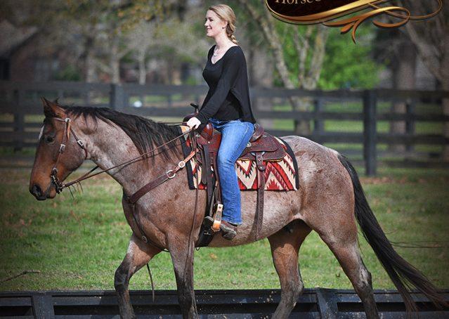 009-Levi-Bay-Roan-Quarter-Horse-For-Sale