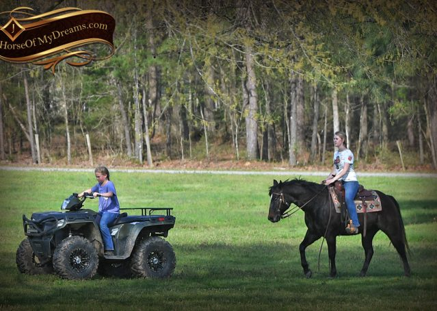 010-Joe2-Black-AQHA-Gelding-For-Sale
