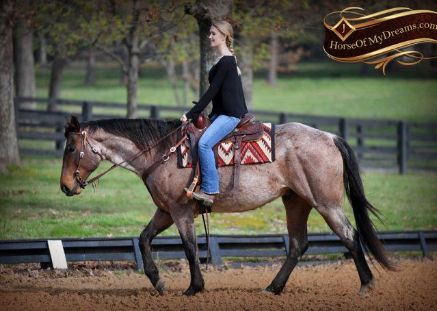 010-Levi-Bay-Roan-Quarter-Horse-For-Sale