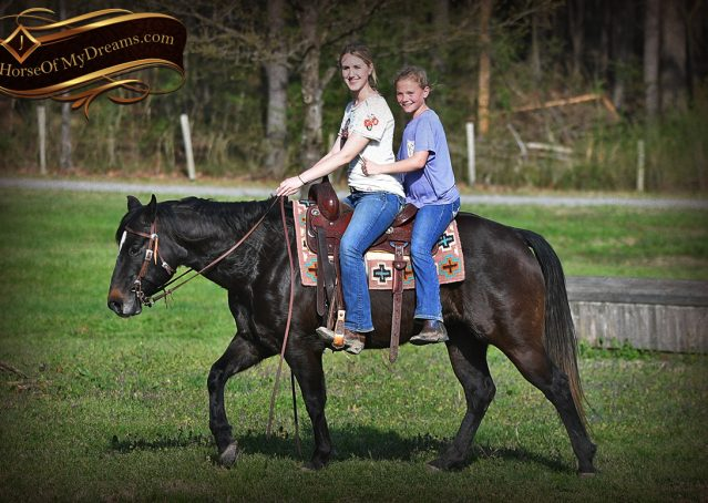 011-Joe2-Black-AQHA-Gelding-For-Sale
