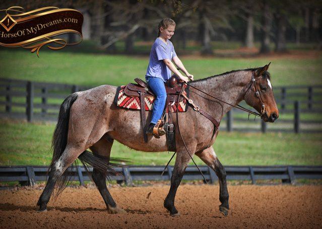 011-Levi-Bay-Roan-Quarter-Horse-For-Sale