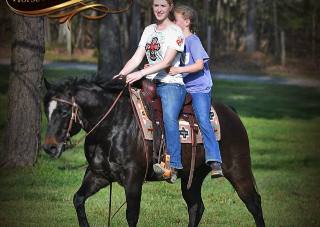 012-Joe2-Black-AQHA-Gelding-For-Sale