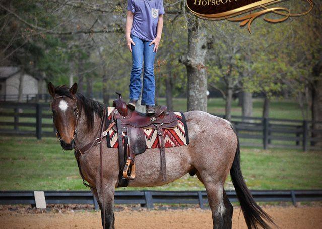 012-Levi-Bay-Roan-Quarter-Horse-For-Sale