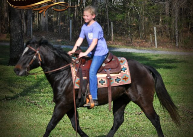 013-Joe2-Black-AQHA-Gelding-For-Sale