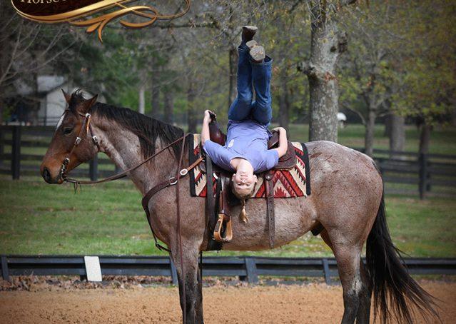 013-Levi-Bay-Roan-Quarter-Horse-For-Sale