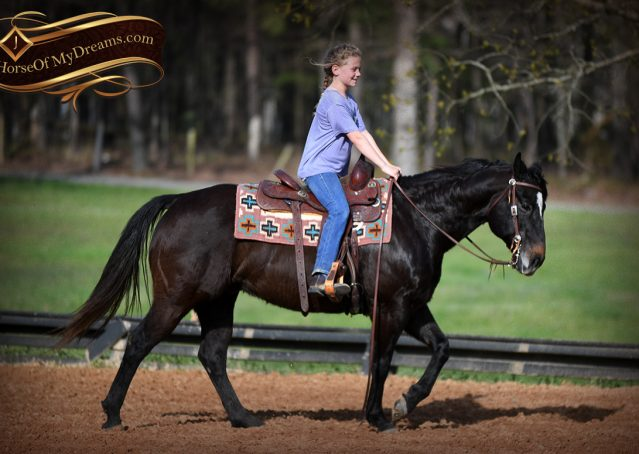 014-Joe2-Black-AQHA-Gelding-For-Sale
