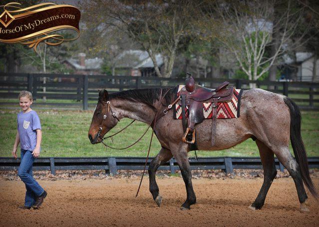 014-Levi-Bay-Roan-Quarter-Horse-For-Sale
