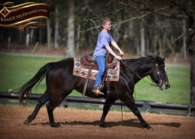 015-Joe2-Black-AQHA-Gelding-For-Sale