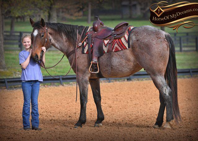015-Levi-Bay-Roan-Quarter-Horse-For-Sale