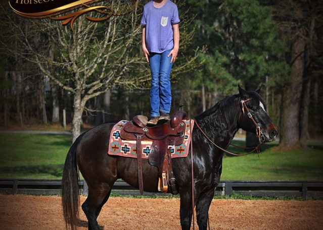 016-Joe2-Black-AQHA-Gelding-For-Sale