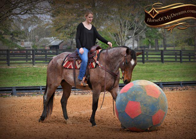 017-Levi-Bay-Roan-Quarter-Horse-For-Sale