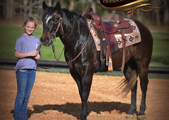 018-Joe2-Black-AQHA-Gelding-For-Sale