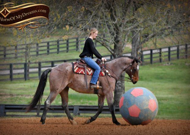 018-Levi-Bay-Roan-Quarter-Horse-For-Sale