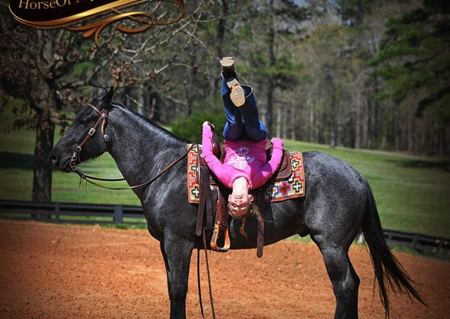 019-Barron-Blue-Roan-Quarter-Horse-Gelding-For-Sale