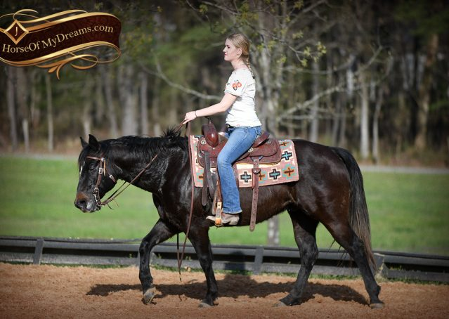 019-Joe2-Black-AQHA-Gelding-For-Sale