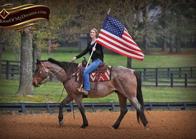 019-Levi-Bay-Roan-Quarter-Horse-For-Sale