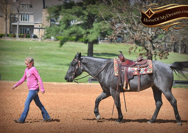020-Barron-Blue-Roan-Quarter-Horse-Gelding-For-Sale