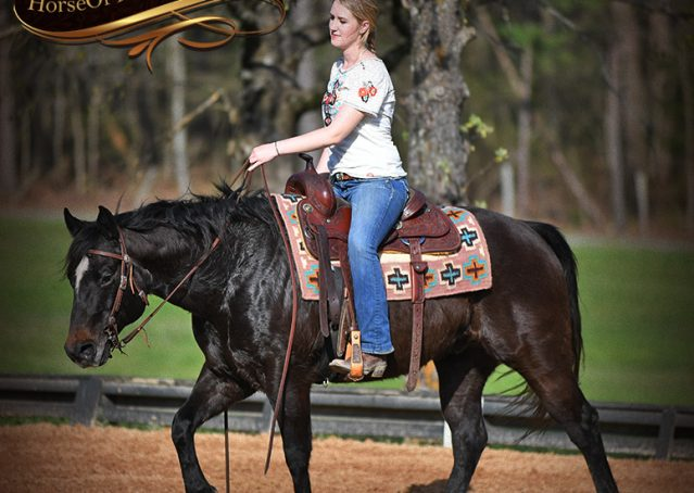 020-Joe2-Black-AQHA-Gelding-For-Sale