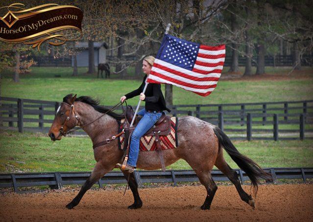 021-Levi-Bay-Roan-Quarter-Horse-For-Sale
