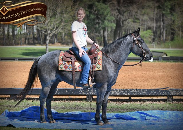022-Barron-Blue-Roan-Quarter-Horse-Gelding-For-Sale