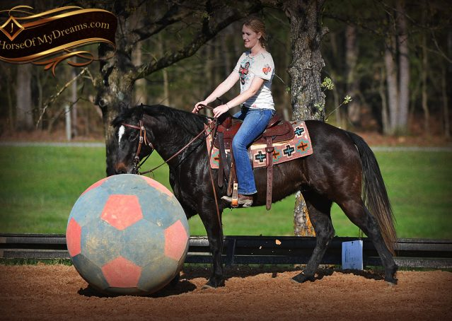 022-Joe2-Black-AQHA-Gelding-For-Sale