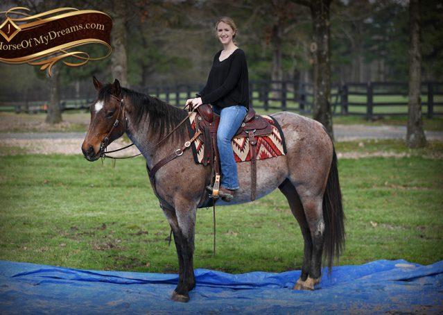 022-Levi-Bay-Roan-Quarter-Horse-For-Sale