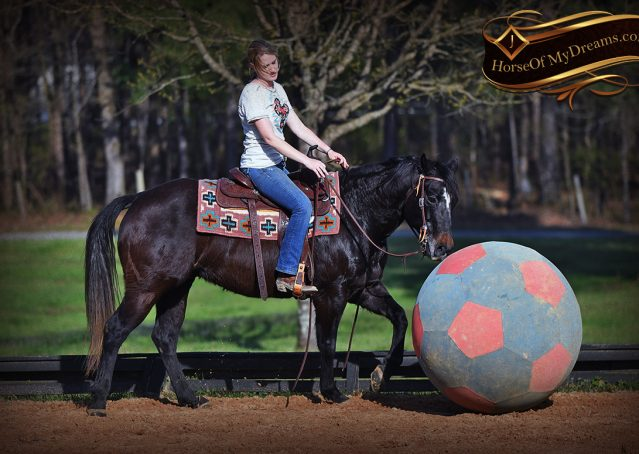 023-Joe2-Black-AQHA-Gelding-For-Sale