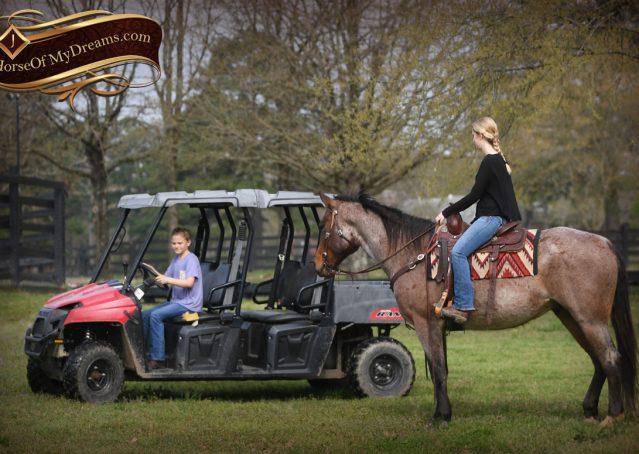 023-Levi-Bay-Roan-Quarter-Horse-For-Sale