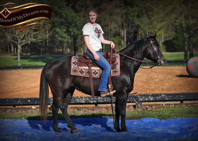 024-Joe2-Black-AQHA-Gelding-For-Sale