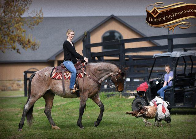 024-Levi-Bay-Roan-Quarter-Horse-For-Sale