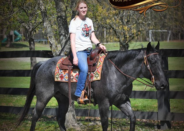 025-Barron-Blue-Roan-Quarter-Horse-Gelding-For-Sale