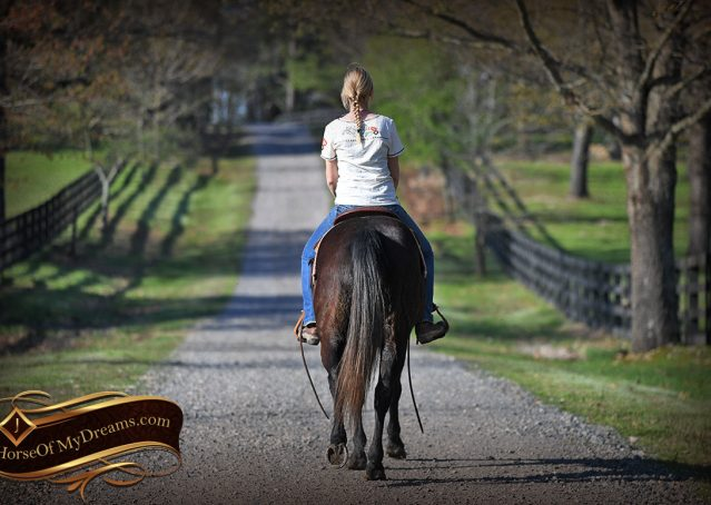 025-Joe2-Black-AQHA-Gelding-For-Sale