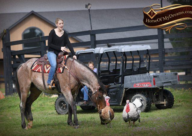 025-Levi-Bay-Roan-Quarter-Horse-For-Sale
