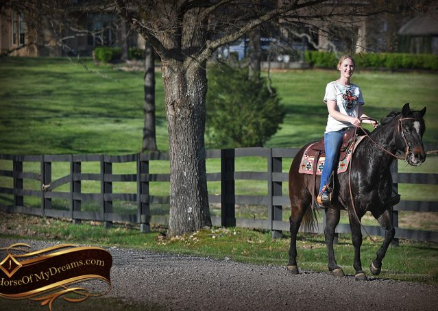 026-Joe2-Black-AQHA-Gelding-For-Sale
