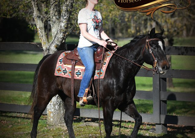 027-Joe2-Black-AQHA-Gelding-For-Sale