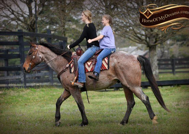 027-Levi-Bay-Roan-Quarter-Horse-For-Sale