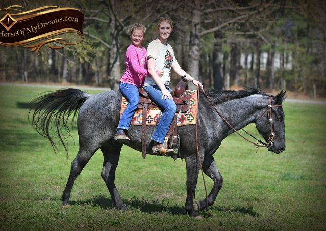 028-Barron-Blue-Roan-Quarter-Horse-Gelding-For-Sale