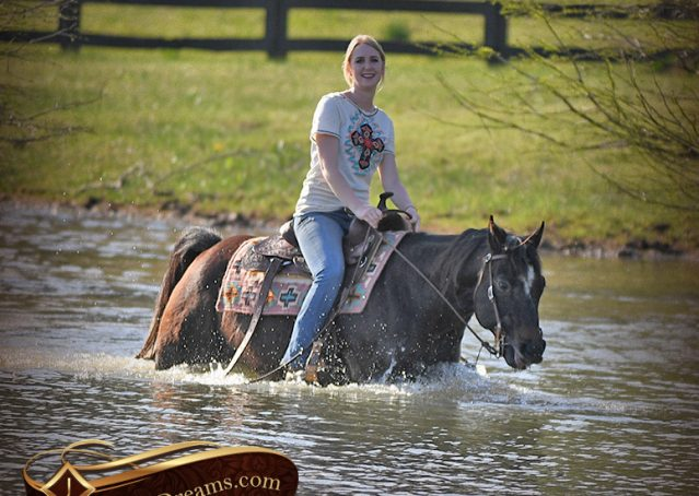 028-Joe2-Black-AQHA-Gelding-For-Sale